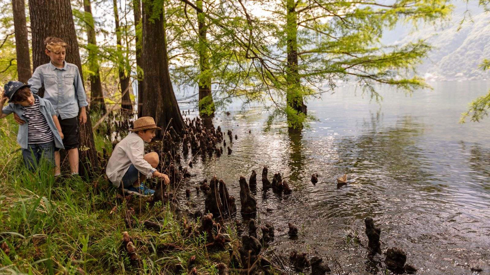 The strange roots of the bald cypress in the water