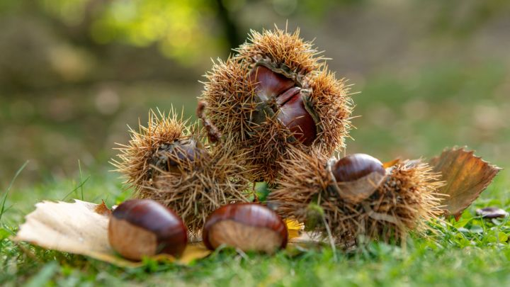5 hikes where the chestnut rules