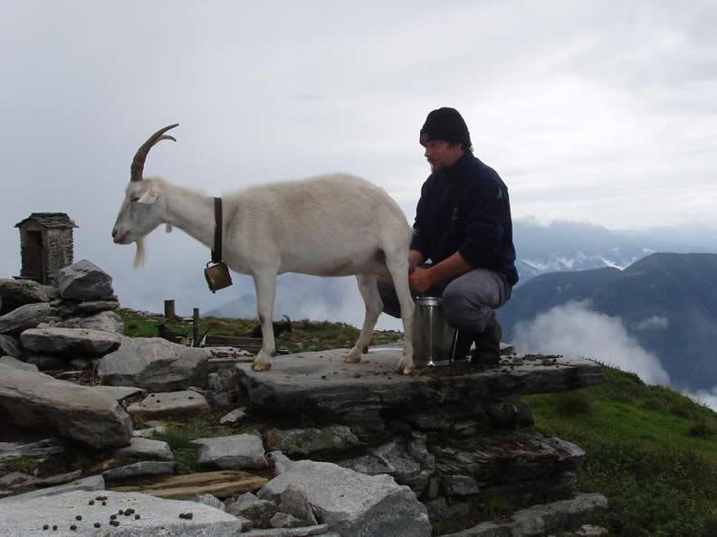Image 2 - Agriturismo Alpe Nimi