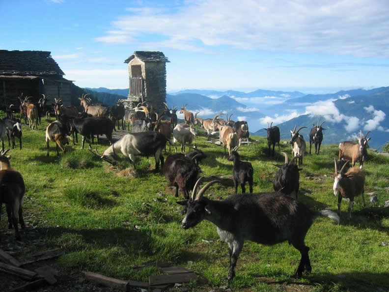 Image 3 - Agriturismo Alpe Nimi
