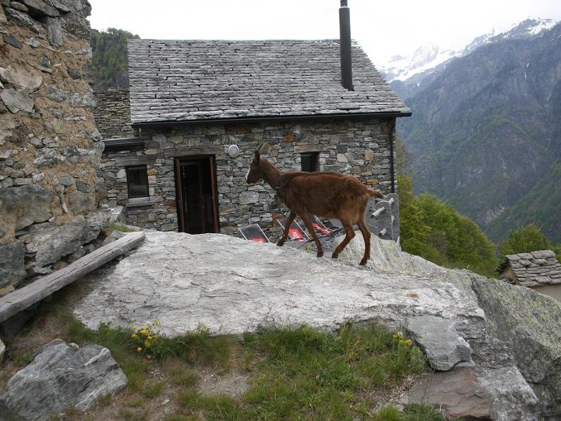 Image 11 - Agriturismo Monti e Paesaggio - Scinghiöra