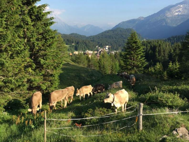 Image 2 - Azienda agricola Ponzio Top Ticino