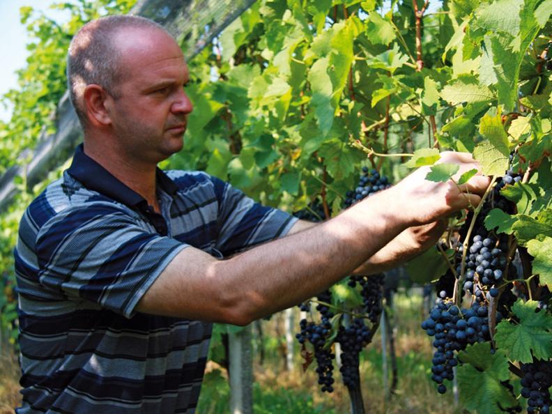 Image 2 - Azienda agricola e vitivinicola Cadenazzi