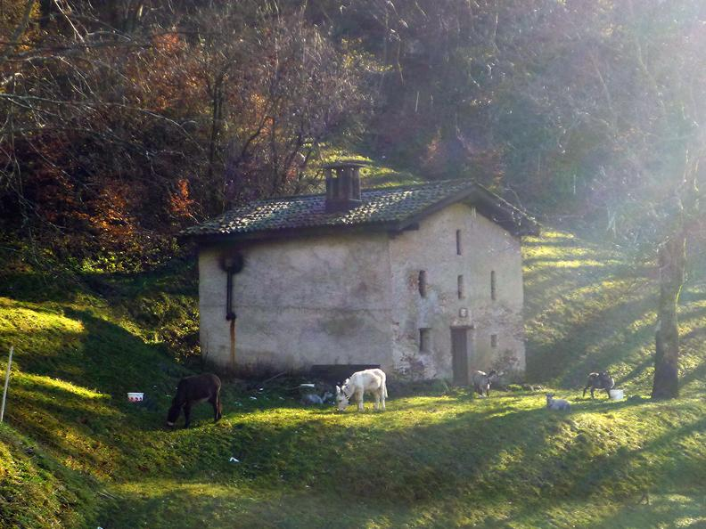 Image 0 - Fattoria agricola Bio di montagna