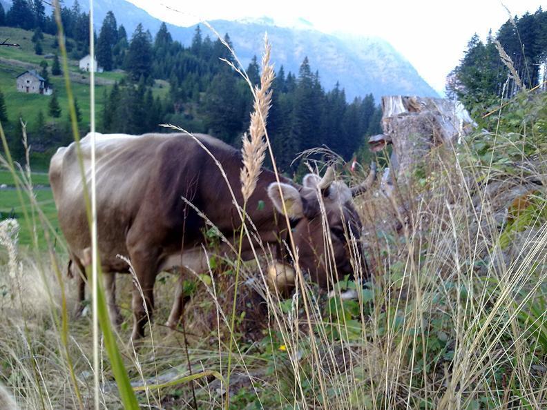 Image 3 - Azienda agricola di montagna