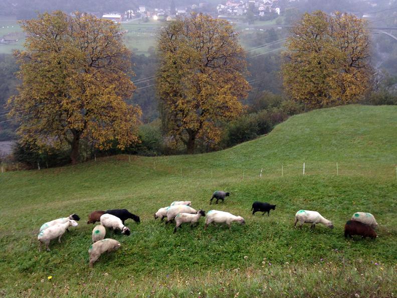 Image 4 - Azienda agricola di montagna