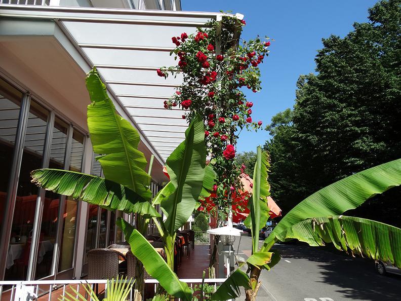 Image 2 - Excelsior Hotel B&B