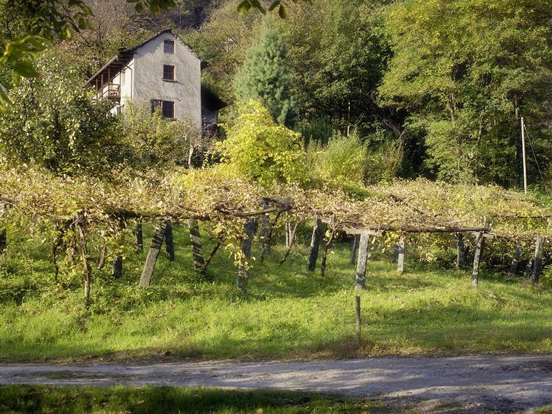 Image 0 - Boschetto Pensione