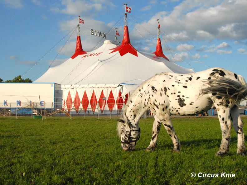 Image 7 - Circo Knie - ANNULLATO