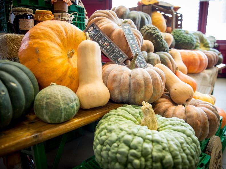 Image 6 - Pumpkin's fair