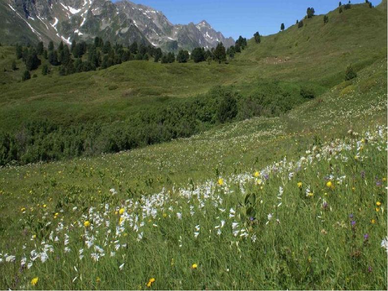 Image 2 - Escursioni botaniche estive 2018 - Piante medicinali, commestibili e velenose