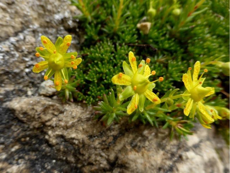 Image 0 - Escursioni botaniche estive 2018 - Piante medicinali, commestibili e velenose