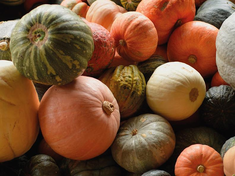 Image 0 - 4th Gastronomic Review of Pumpkins