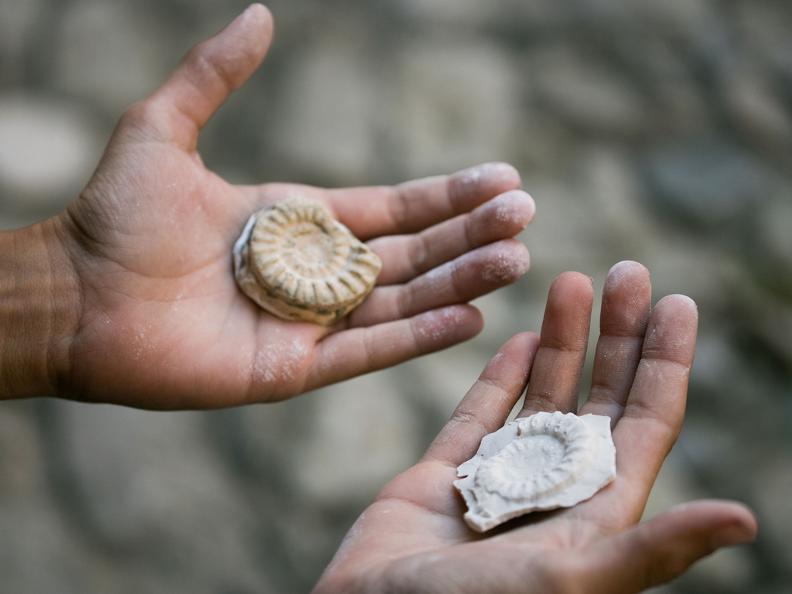 Image 2 - Summer Camp for Mini-Paleontologist
