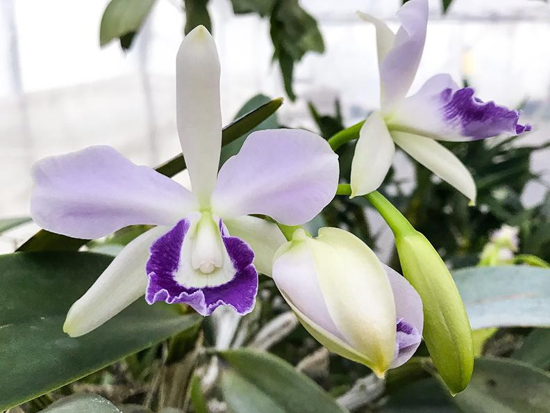 Image 0 - Orchidable - Open days