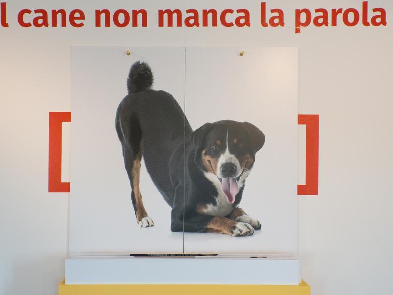 Image 0 - Vie de chien! Entre nécessité et absurdité