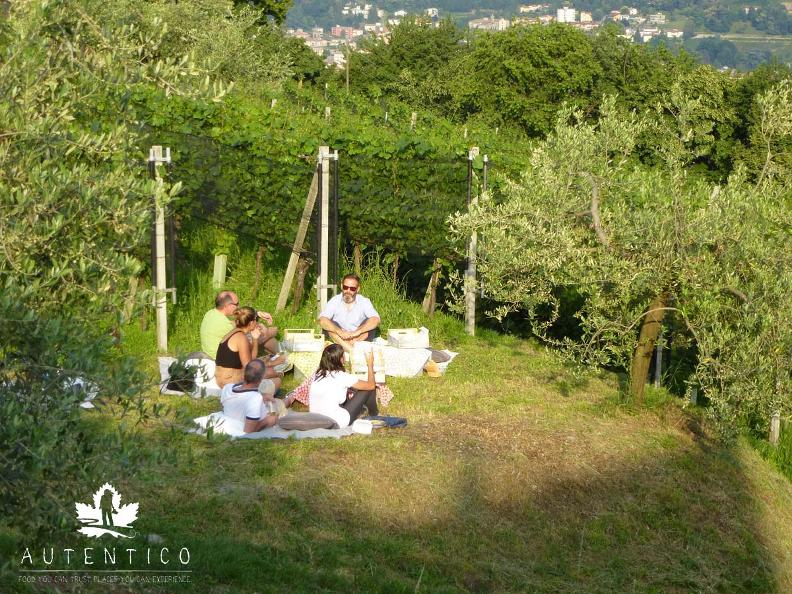 Image 4 - Vignic - picnic in the vineyard!
