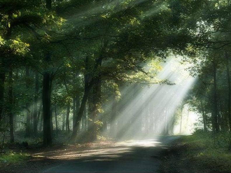 Image 0 - The secret language of trees