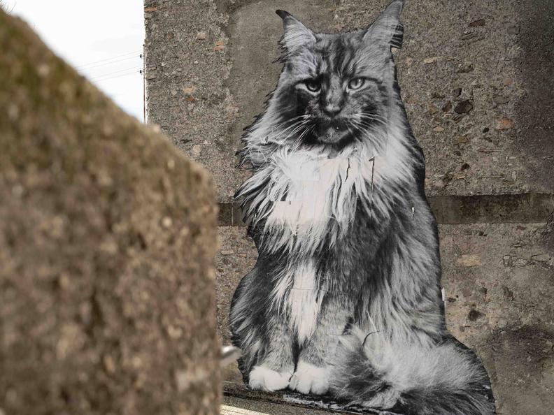 Image 1 - The Cats of Rovio