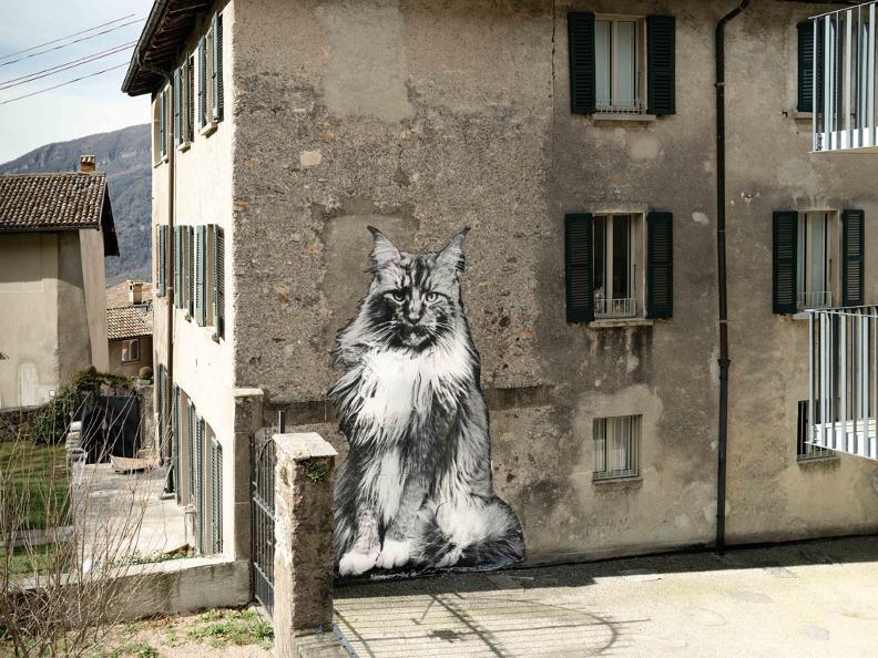 Image 2 - The Cats of Rovio
