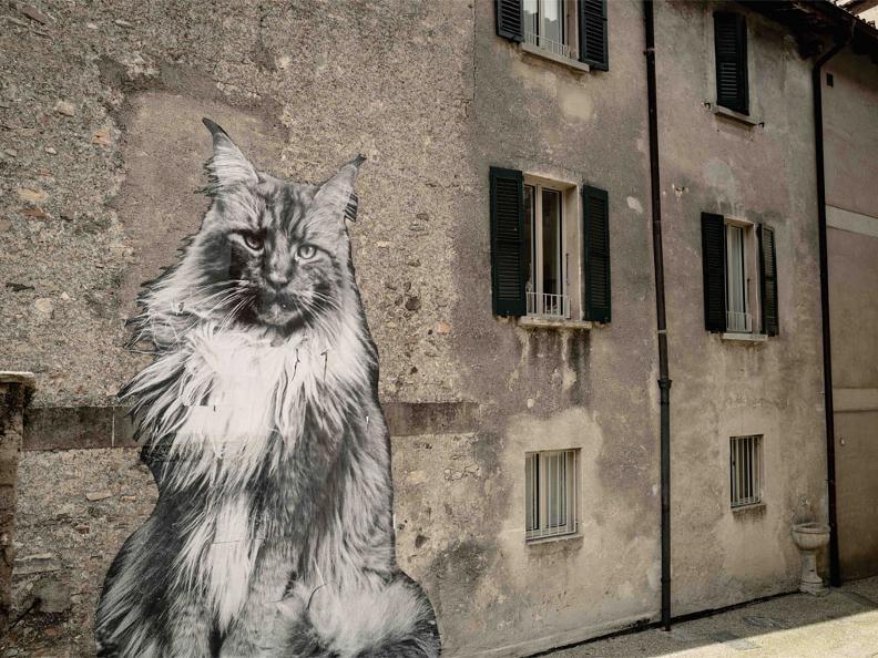Image 0 - The Cats of Rovio