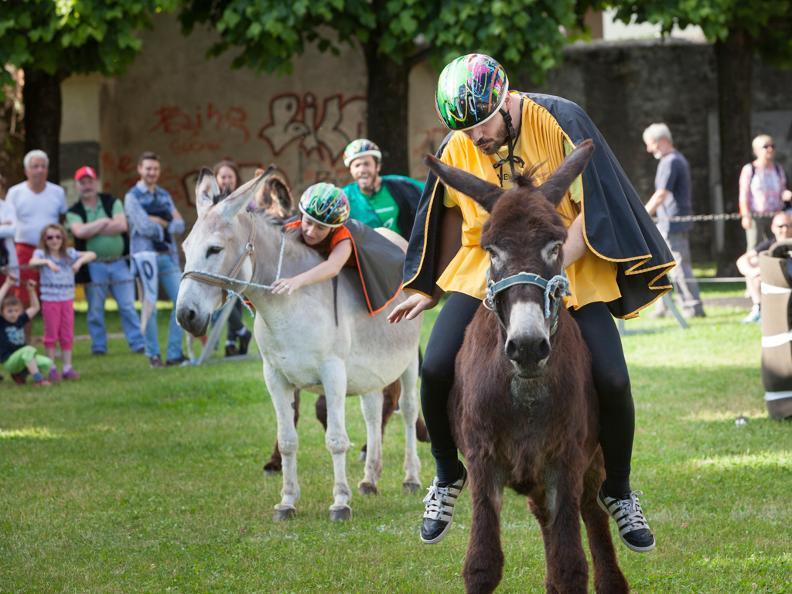 Image 0 - Eselrennen