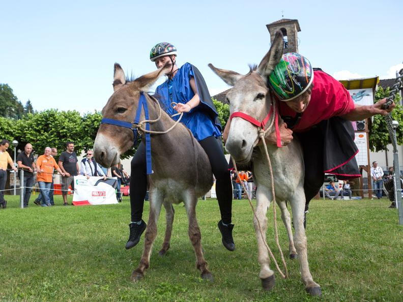 Image 3 - Eselrennen