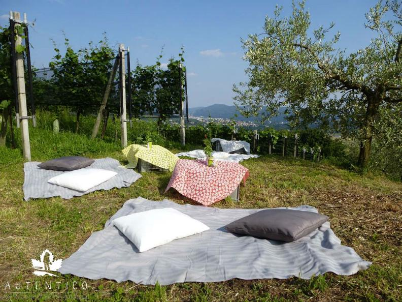 Image 1 - VIGNIC - Picnic in the vineyard!