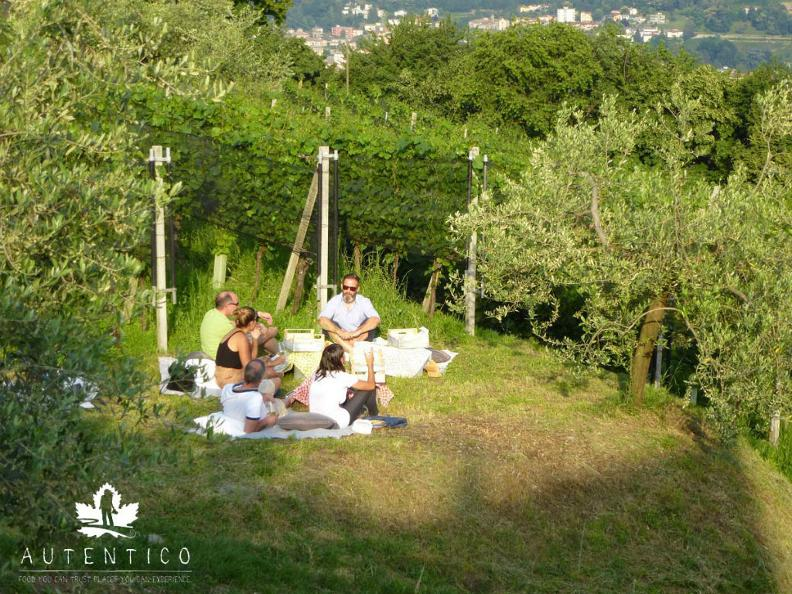 Image 3 - VIGNIC - Picnic in the vineyard!