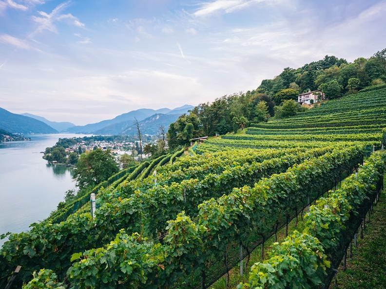 Image 1 - Open wine cellars days