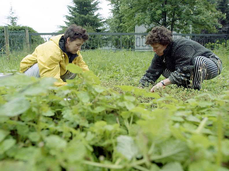 Image 1 - Herbes aromatiques et officinales