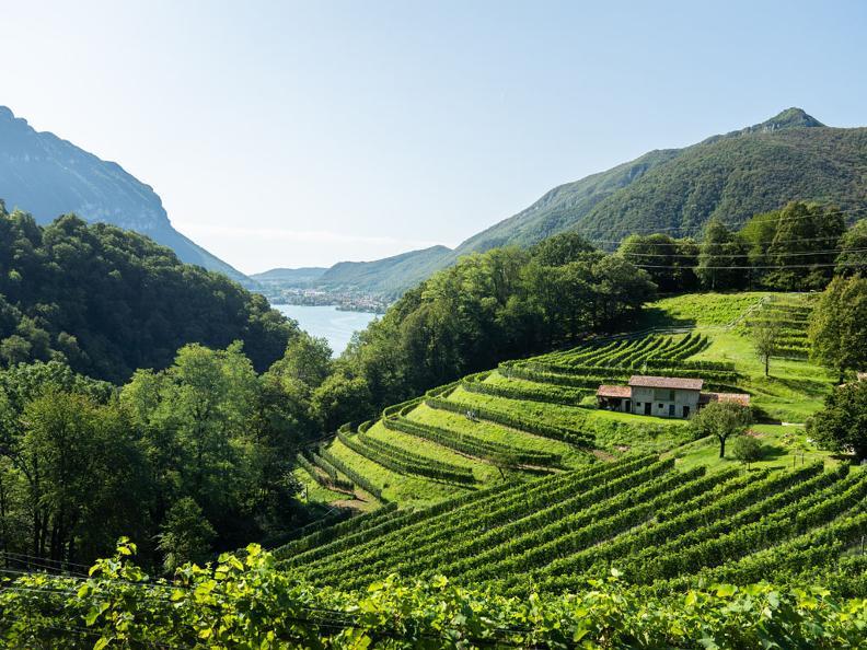 Image 3 - Visita l'Azienda Agricola Bianchi