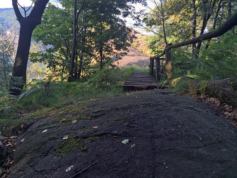 Image 1 - Dans le bois de Maia