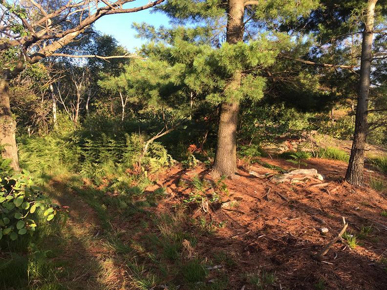 Image 3 - Dans le bois de Maia