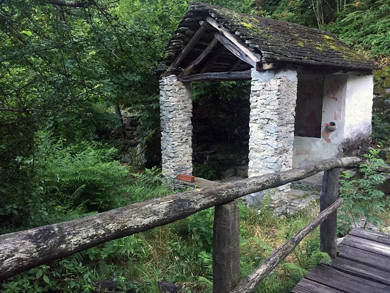 Image 6 - Dans le bois de Maia