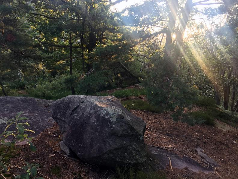 Image 8 - Dans le bois de Maia