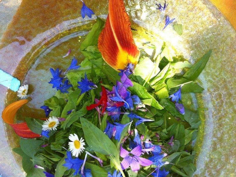 Image 1 - Connaître les plantes sauvages
