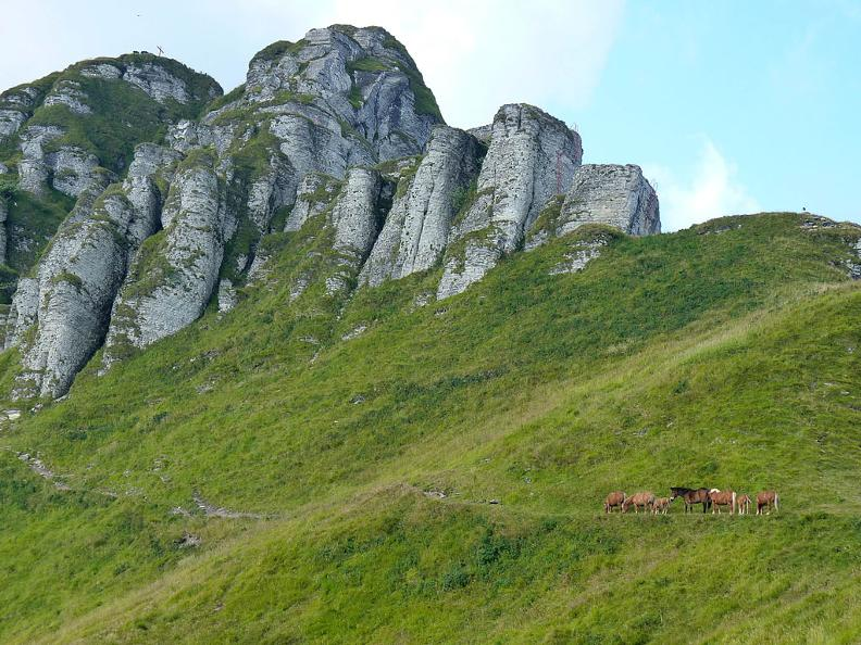 Image 0 - The wild horses of Monte Bisbino