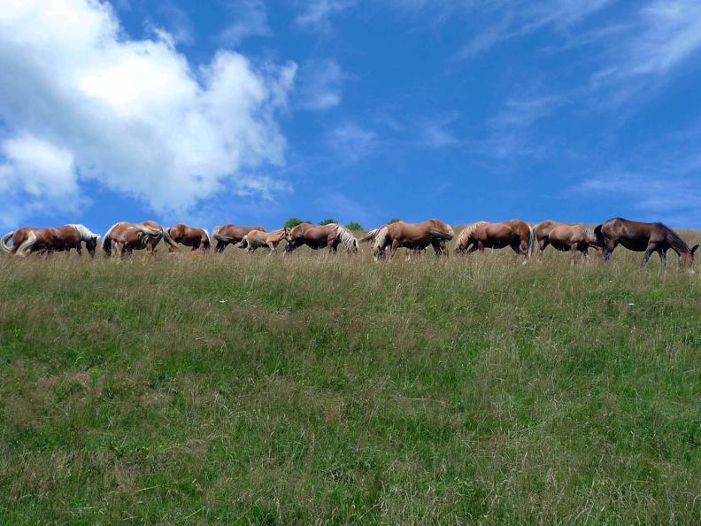 Image 1 - The wild horses of Monte Bisbino