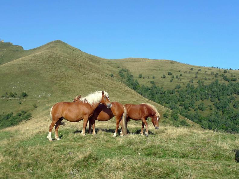 Image 2 - The wild horses of Monte Bisbino