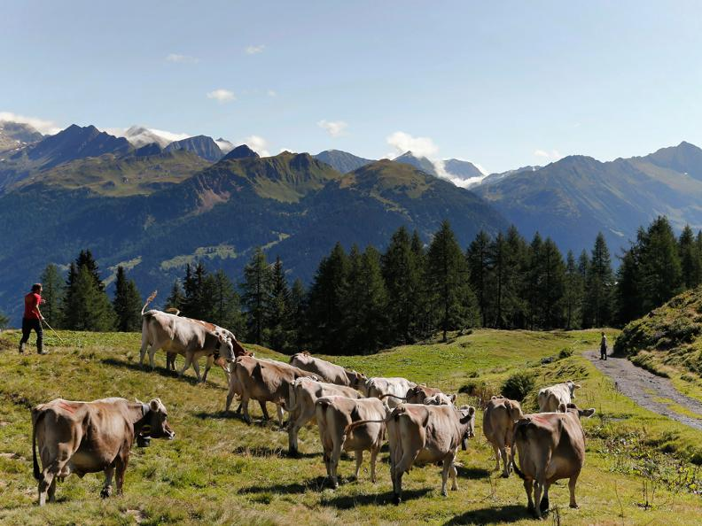Image 0 - Walking on grazing land - Cows