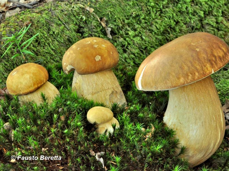 Image 0 - Die Zauberhafte der Pilze