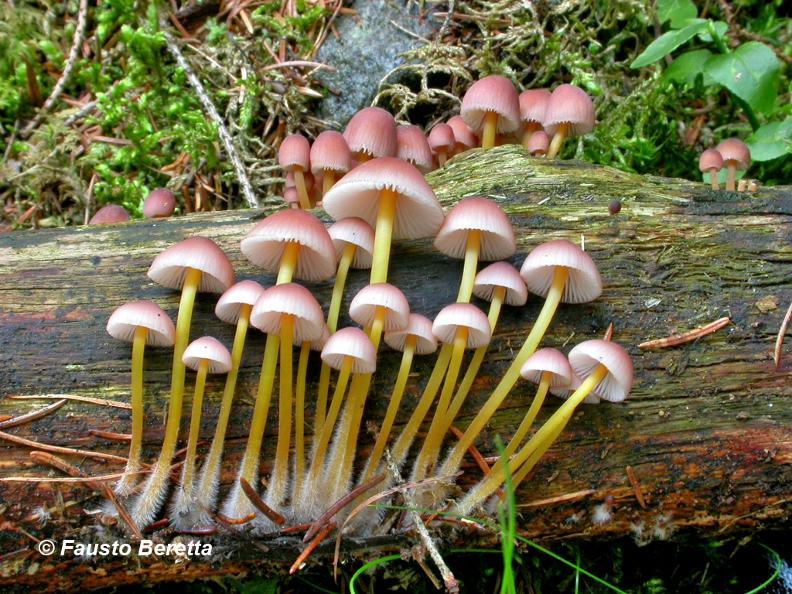 Image 3 - Il magico mondo dei funghi
