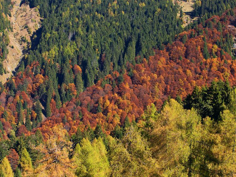 Image 0 - Hinweise auf die Flora und Fauna im Camoghè-Gebiet