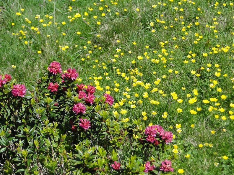 Image 2 - Hinweise auf die Flora und Fauna im Camoghè-Gebiet
