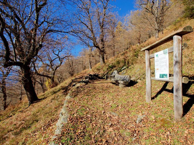 Image 1 - Wald
