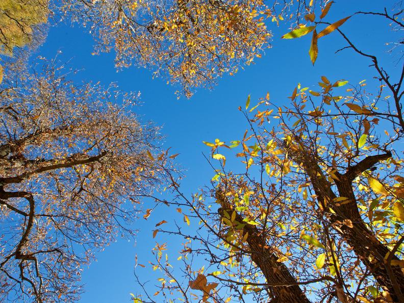 Image 0 - Wald