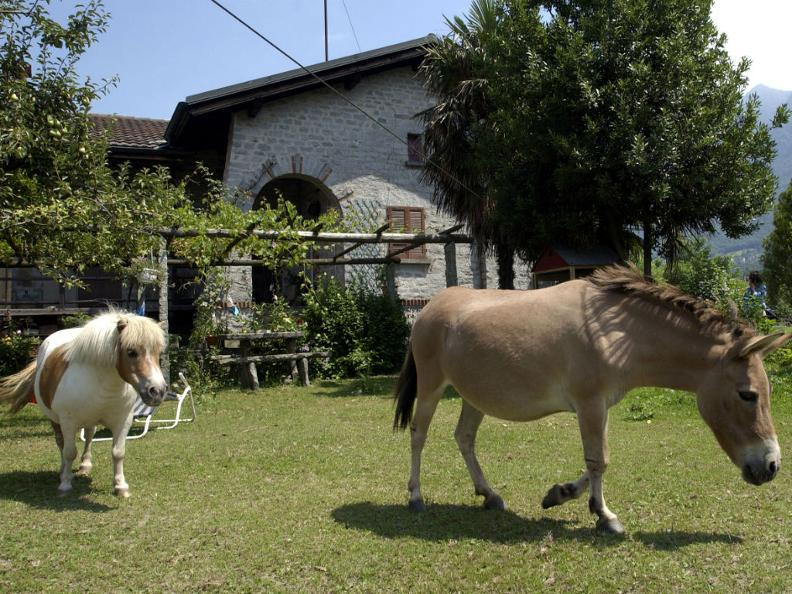 Image 3 - Farmhouses and horses