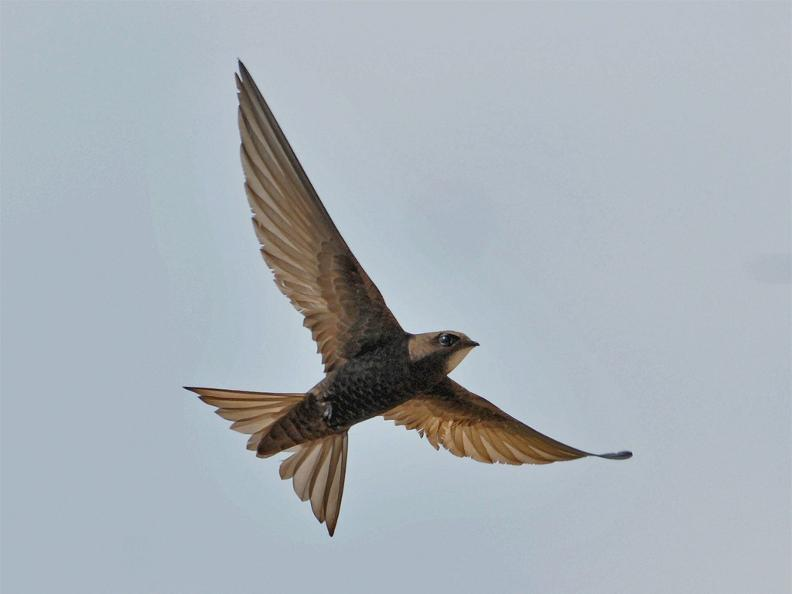 Image 1 - Swift Birding Trail