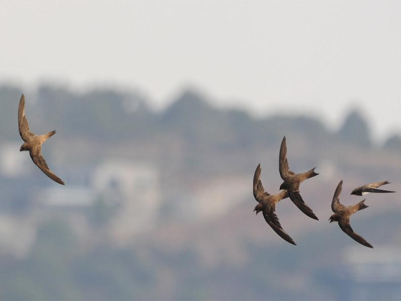 Image 0 - Swift Birding Trail